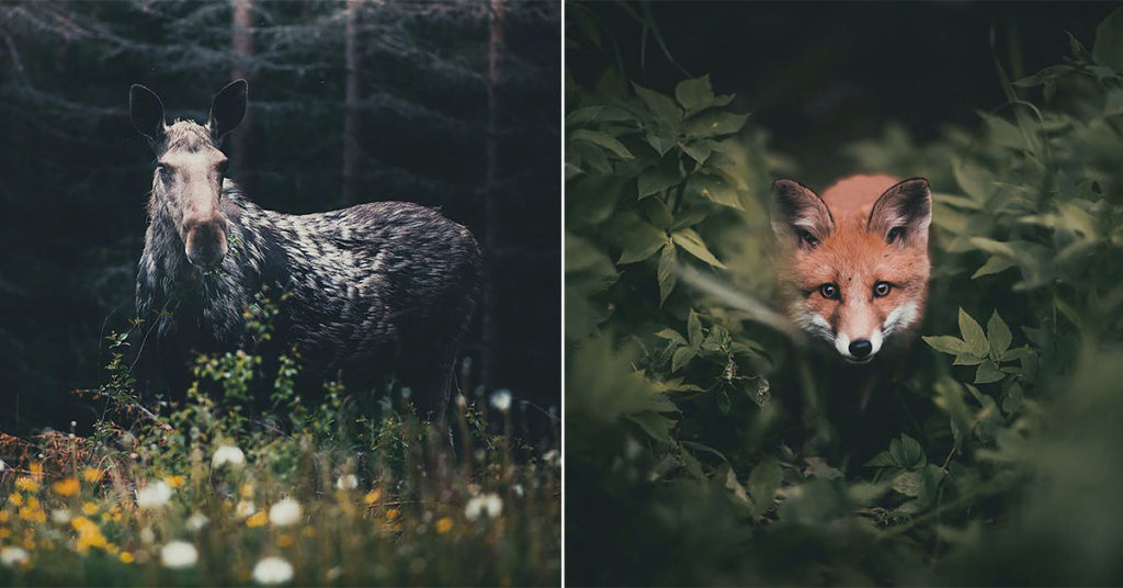 Photographer Captures The Soul Of The Forest With Stunning Animal Portraits | TIMEWHEEL