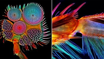 Extraordinary Details of Microscopic Creatures showcased in the Nikon Small World Contest