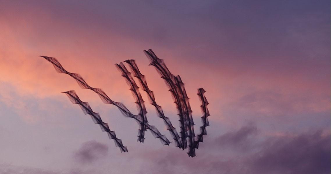 Aves en vuelo por Xavi Bou11