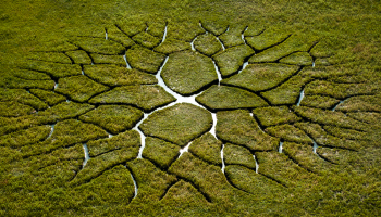 Artist Creates Giant Branching Pattern on the Surface of a Mossy Bog